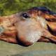 cheval qui mord